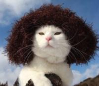猫って可愛すぎません?