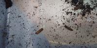 カブトムシを飼っているくぬぎマットの中に画像の様な虫がいます。 カブトムシが卵を産んだので、息子はカブトムシの幼虫だと思い一生懸命に育てていますが、私からするとカブトムシの幼虫には 思えません。 こ...