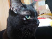 飼っている猫の目の横あたりが少しはげてきています。 何かの病気なのでしょうか? わかる人がいたら教えて下さい。