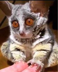 この可愛い動物の名前は何ですか?またこの子を飼うことは可能でしょうか?よろしくお願いします