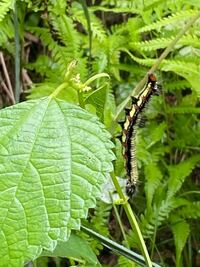 大きな毛虫が雑草を食べていました 危ない種類でしょうか