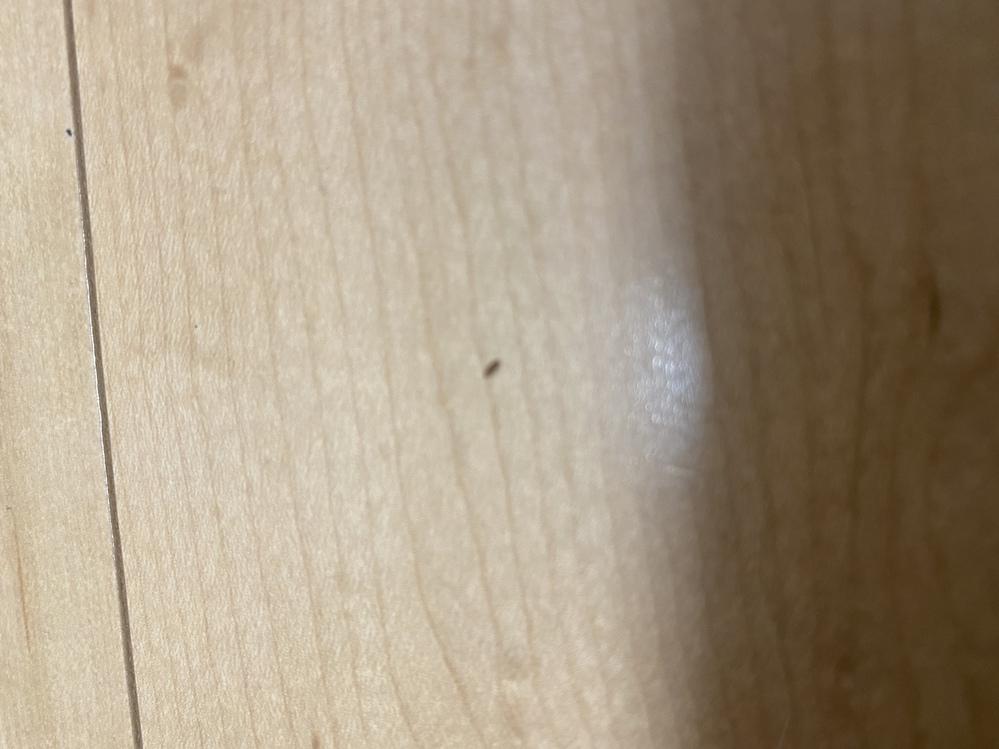 0.5~1、2ミリくらいの黒い虫が大量発生して困っています。 一軒家の2階の部屋なのですが、8月下旬頃からちょいちょい部屋で見かけて、その都度潰していました。 場所はベット、机の上、カー テン...