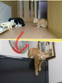 単身赴任をしてる男です。 私は先住猫を連れて、単身赴任しているのですが、三ヶ月ぶりに先住猫を連れて帰宅したら、新人猫が調子に乗っていました。  この画像は使い回しで、大変申し訳ないですが、どう思います...
