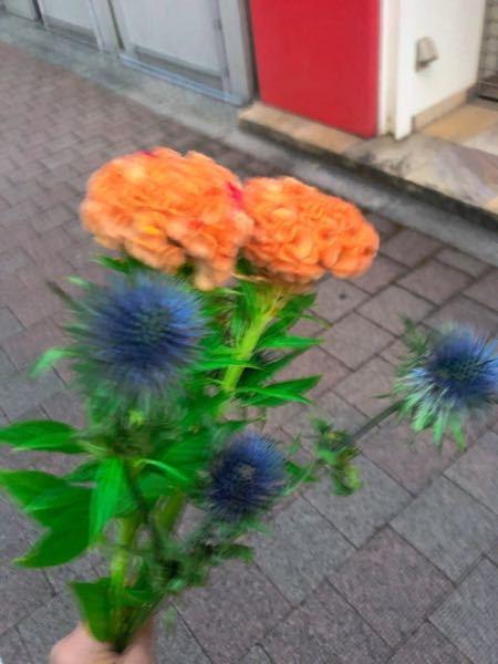 この花はドライフラワーになりますか?