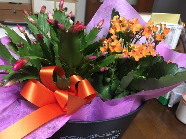 花の名前を教えてください! 右と左、なんの花かわかりますか?