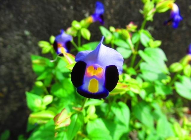 小一時間調べましたがわかりませんでした。この花の名前を教えてください。
