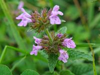 この植物の名前はなんですか? 撮影日は9月中旬,撮影地は伊吹山です。