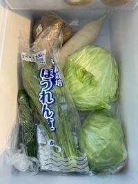 実家から生野菜をたくさんもらいました。 大根1本、キャベツ1玉、レタス1玉、じゃがいも4個、キュウリ1本、ほうれん草2束  私は旦那と2人暮らしなのでこんなにたくさんの生野菜を傷む前に消費し切れるか分かりま...