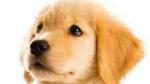 お金が何故なんたらの犬の方と、ラブラドールちゃんだよう、の犬の方は、別の方ですか?