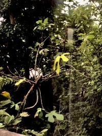この身がなっている木はなんの木ですか?   剪定 隣人 隣人トラブル 庭木 庭