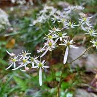 花の種類を教えてください。 花びらが一つだけ長く、特徴のある花ですが、 画像検索してもわかりませんでした。