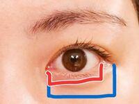 目の横幅と、目と目の間が1:1:1が美しいと言われていると思うのですが、目の横幅の測り方を教えてください。 赤線のように、目頭から白目の終わりまでで測ればいいのでしょうか。 それとも、青線のように、目頭から二重線の終わりまでを「目」として測っていいのでしょうか。