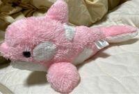 これ鴨川シーワールドで買ったのですが、 イルカですか?シャチですか?