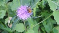 蜂の種類を教えてください。<(_ _)>