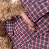 犬の病気に詳しい方、専門家の方に質問します 写真のように、足の毛や身体の毛が抜け、赤くただれています。よく舐めているので気づくたびに注意しているのですが、痒いのか、掻いています。動物病院にも受診し、痒み止めの薬を貰っているのですが、なかなか治らず半年ほど経ちます。  原因が分からず、困っています。愛犬が同じ症状を持った方はいらっしゃいませんか?この病気は何でしょうか?アドバイスや知識を教...
