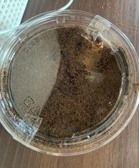 カブトムシの幼虫を2匹もらってきました。 旦那はもらってきた容器のまま置いておけばいいと言うんですが、本当に大丈夫なのでしょうか? 窮屈そうだし、幼虫も出たそうに蓋をかじっています。 大きめの容器に入れて土も追加したほうがいいと思うのですが、どうなんでしょうか?  今は画像のような入れ物に1匹ずつ入っています。 詳しい方教えてください。