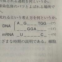DNAとmRNAの塩基配列がよく分かりません DNAのほうは分かるのですが mRNAがよく分からないです。 あとDNAの右から2番目の対の組み合わせがなんでAとTになるのかが分かりませんㅠㅠㅠ 誰か教えてくださいり