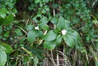この白い花が咲いている植物の名前を教えてください。よろしくお願いいたします。