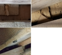 階段下の収納を整頓し床を拭いてる時 柱とフローリングの隙間にホコリがたまってたので 拭いた後ごみといっしょに 画像のような卵?木くず?が固まってありました。 形はどれも同じくらいのサイズです。 気になり...