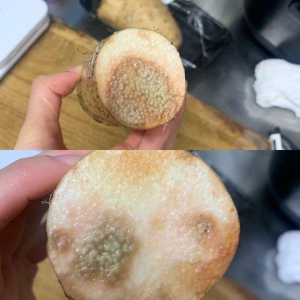 昨日った長芋ですがこちら腐ってますか? 冷蔵庫の野菜室に入れてました。 500gで100円でした。