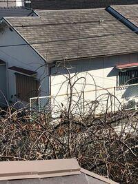 庭の木が電線に引っかかってるんですがこれって大丈夫ですかね?ふと庭の外を眺めていたらこの画像(見づらいかもしれませんが)のように電線が庭の木に引っかかってるのを発見しました。この状態って大丈夫なんで...
