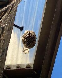蜂に詳しい方、蜂の巣について質問です。 これって何の蜂の巣ですか? 1匹だけですが、近くに蜂がうろついてて怖いです。 駆除した方がいいですよね。