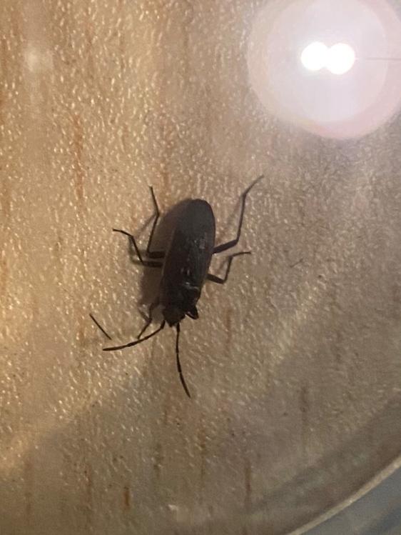 緊急!これは何の虫ですか?
