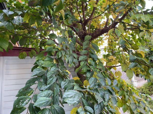 こんにちは。 これ何の木ですか。 どなたかよろしくお願いします。