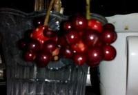 この木の実は何という木のものでしょうか? 小さなブドウのように見えるのですが 見当がつきません。  よろしくお願いします。