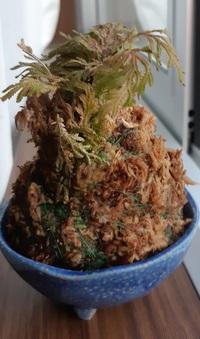 この苔玉って枯れてますか? それとも休眠期と言うものでしょうか?