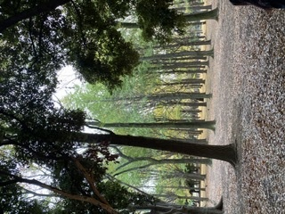 代々木公園にある木なのですがなんの木かわかる方いますか?