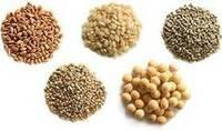 五穀で、初心者でも育てやすい順を教えて下さい。   古来より五穀豊穣と言いますよね。 米、麦、大豆、あわ、きび(あるいは ひえ)であるそうです。 五穀のいずれかを農耕するのに、最初から米に挑戦するのは避けたほうが良いというのをどこかで聞きました。  なんでも、米は美味しくてカロリーも多く含んではいるものの、豊作にさせるにはかなり技術や知識が必要だからであると。 アワやキビなどの方が初心者でも...