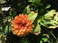 花の名前を教えてください  マンションの敷地にこの花が咲いていたのですが何という名前の花か分かる方いらっしゃいますでしょうか?? この時期に花が咲いているのが珍しくて気になりました!教えていただけると助かります。