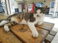 豊見城の道の駅豊崎にいる野良猫は、まだ元気ですか。