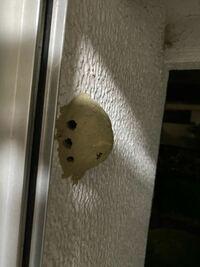 蜂の巣でしょうか? キッチンの網戸のない方の窓を久しぶりに開けたところ、画像のような巣がありました…  これは蜂の巣でしょうか?