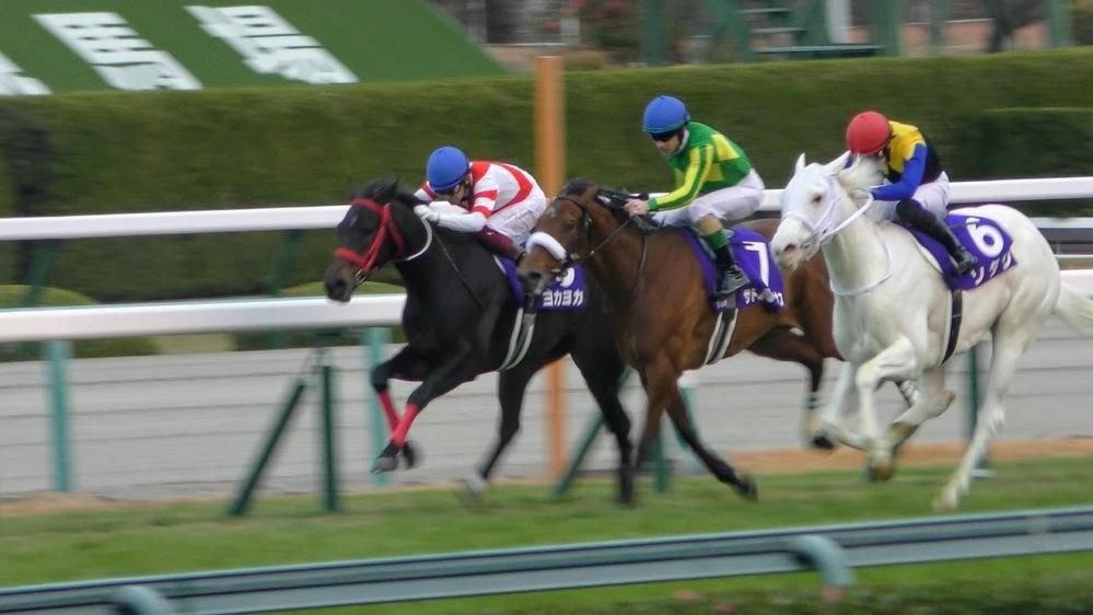 ヨカヨカ サトノレイナス ソダシ 各馬の次の(桜花賞までの)レースはどのレースになりそうですか?