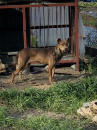 今は純血種の現役猟犬って少ないですか? 大抵、ハウンドや日本犬の雑種でしょうか? 現役の猟犬を見ていてそう思いました。