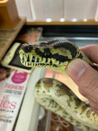 この蛇はなんて言う種類の蛇ですか?
