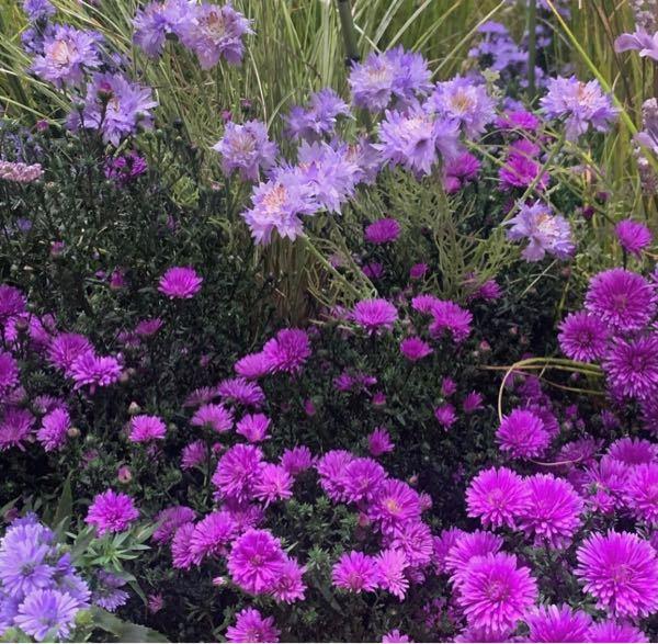 この2種類の花はなんて言うお花ですか?