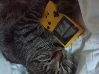 電源は入るのですが、壊れて起動しない ゲームボーイを猫さんにあげたら、大切にゲームボーイを抱き締める猫さんは かわいいですか? それとも、壊れたゲームボーイが起動しないので、猫さんがかわいそうですか?(笑)