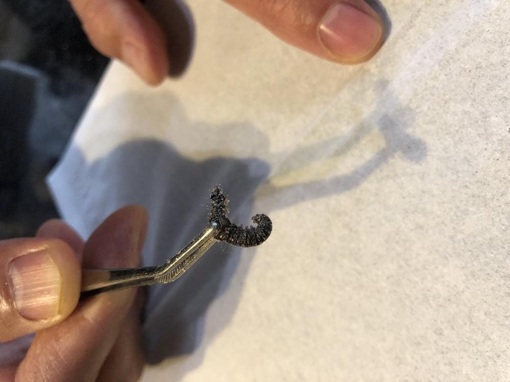 家から1.5〜2センチくらいの黒いなにかの幼虫が出てきました。 微妙に毛が生えてます。 一体何の幼虫なんでしょうか。