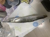釣りに行ってきて、トリックサビキで釣れたのですが、これは、何という魚ですか?