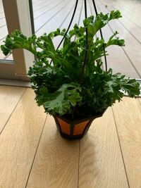 観葉植物の名前を教えてください! 今日ホームセンターで観葉植物の福箱を購入したのですが、この植物の名前がわかりません。 お店の人に聞いてもわかりませんでした...。 ご存知の方、教えてください!
