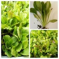 亡き母がプランターに植えていた植物の名を教えて下さい。花なのか野菜なのかさえもわかりません。しっかりと育て上げたいです。 よろしくお願いします。