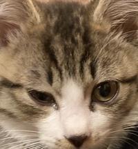 生後3ヶ月の子猫です。先程から片目をしばしばさせて痛そうです。目やにも少し出ています。 明日、朝一で病院に行くつもりでいますが、今から夜間救急などで診てもらったほうがよいでしょうか?心配です…