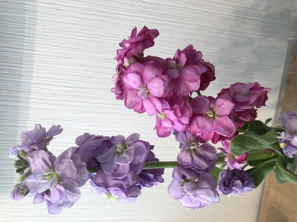 この花の名前を教えてください