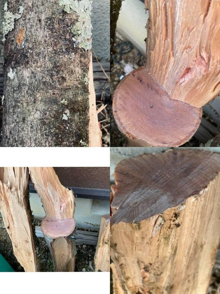 この木材は何という名前でしょうか 滋賀の米原にあった木材を頂いたのですが、針葉樹なのか紅葉樹なのかも分からず どなたか分かる方いらっしゃいましたら ご教授お願いいたします。