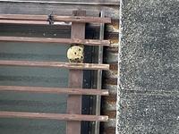 これは何の巣かわかる方いらっしゃいますか? 知り合いの家の向かいの家の窓枠にいつのまにか出来ていました。テニスボールくらいの大きさです。 穴がたくさん空いていてスズメバチぽくありません。蜂の出入りも...