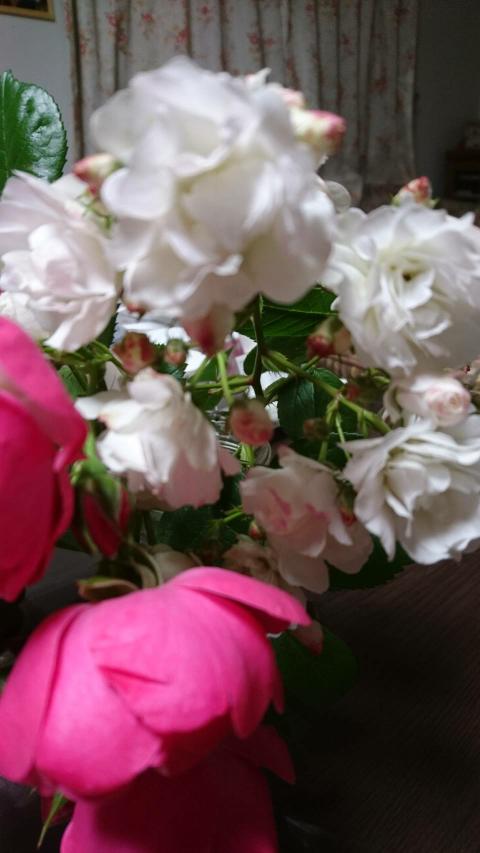 この白い薔薇の名前を教えてください。 ミニ薔薇で良い香がしました。