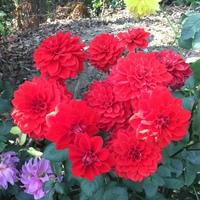 この赤い花は何という花でしたっけ??